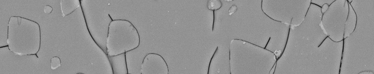 SEM image of a glass ceramic